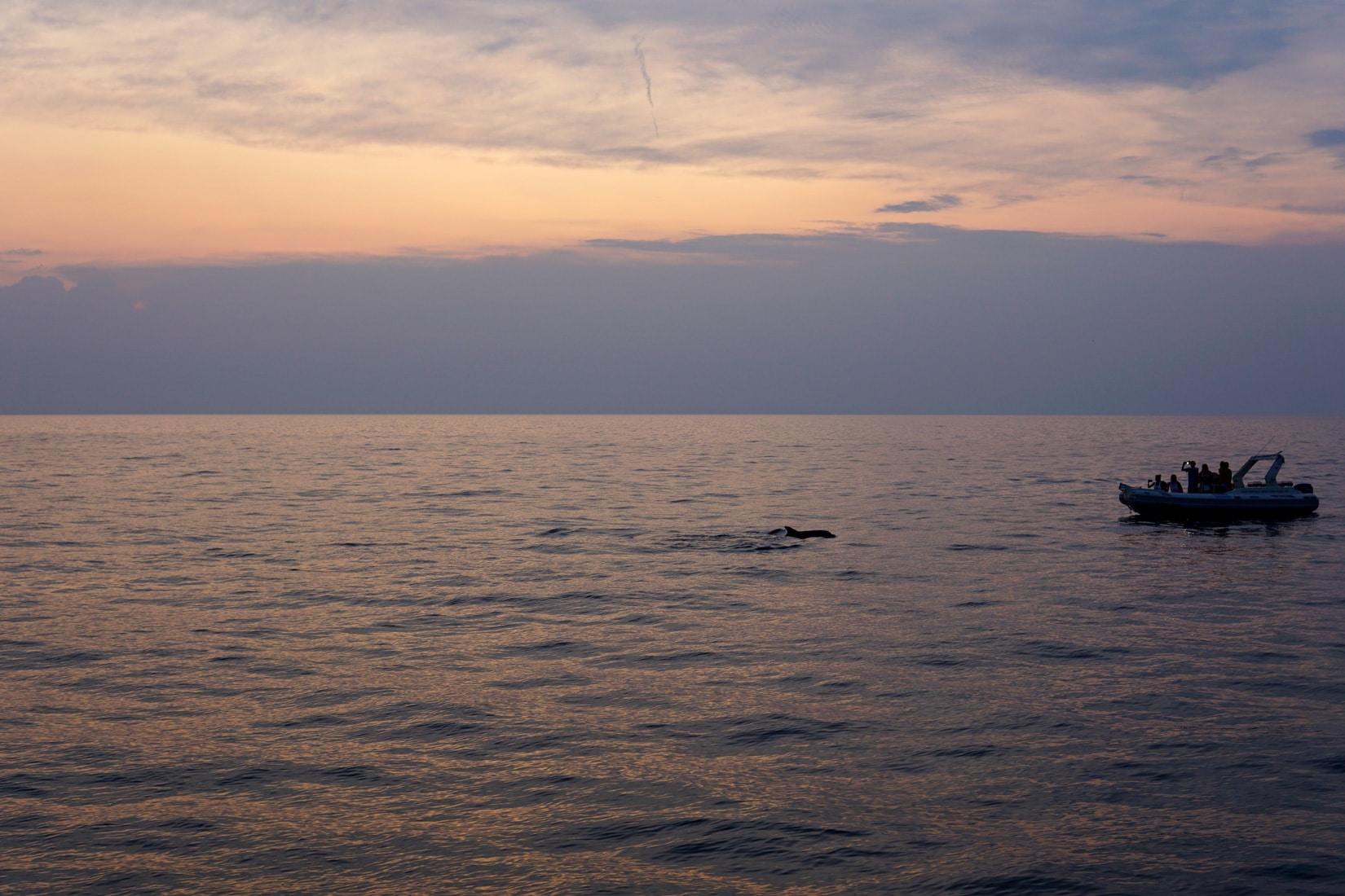 kroatien-delphine