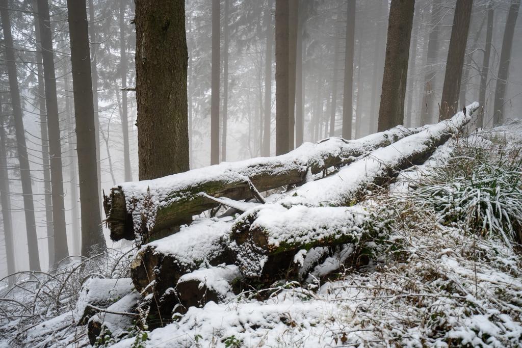 winterlandschaft-schnee
