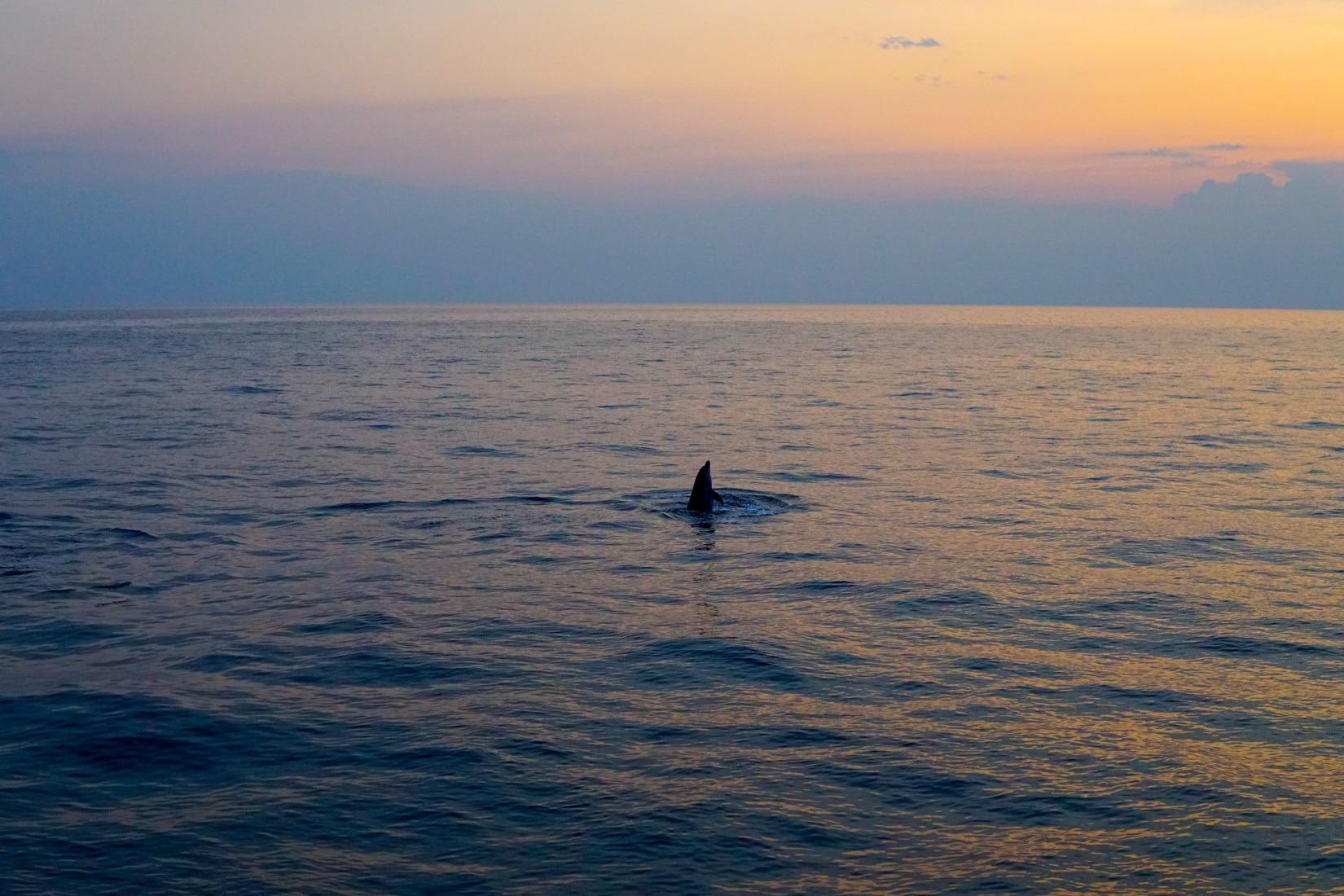 delphinen-rovinj