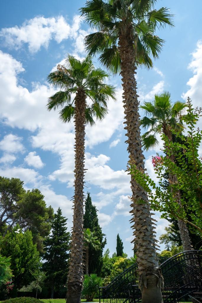 palmen-rovinj
